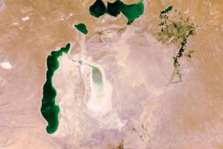 Aral dənizinin quruyan ərazilərində meşə zolağı salınır