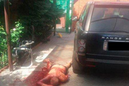 """""""Yaponçik""""in varisini Ukraynada doğradılar - VİDEO"""