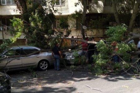 Bakıda külək altı ağacı aşırdı: ikisi maşının üstünə düşdü
