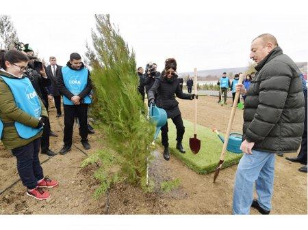 Azərbaycanın ekologiya tarixində özəl gün - 650 min ağacın əkilməsi reallaşdı