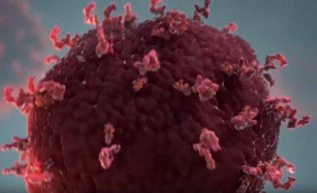 İmmunitet sistemi koronavirusla necə mübarizə aparır