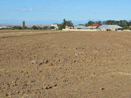 Bələdiyyələrin qanunsuz verdiyi 2400 hektardan çox torpaq sahəsi geri qaytarılıb - Nazirlik